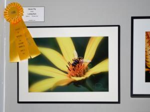 Hover Fly By Ludwig Keck Gets Yellow Ribbon At Images Of Nature Exhibit